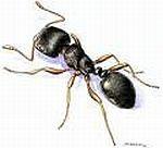 Ant Pest Control Sacramento