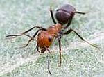 Ant Control Sacramento