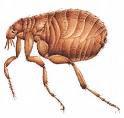 Sacramento Pest Control